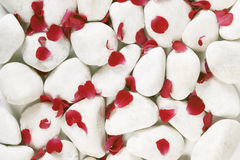 Red rosse petals on white pebbles Stock Images