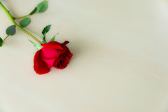 Red Rosses Royalty Free Stock Photo
