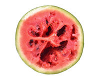 Red rot watermelon cut into pieces, placed on a white background Stock Image