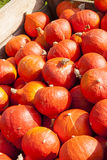 Red roter Hokkaido cucurbita pumpkin pumpkins from autumn harves Royalty Free Stock Image