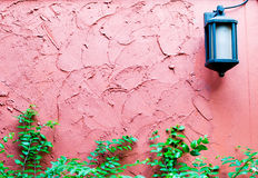 Red rough plaster cement wall with plant and lamp Stock Image