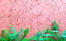 Red rough plaster cement wall with plant and lamp Stock Photo