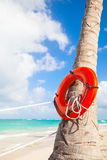 Red round life buoy hanging on the palm tree Royalty Free Stock Image