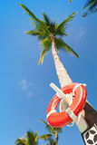 Red round life buoy hanging on the tall palm tree Stock Images