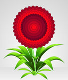 Red rounded blossom blooming flower  Royalty Free Stock Photos