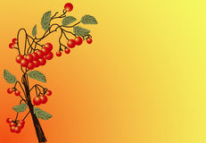 Red Rowan Royalty Free Stock Image