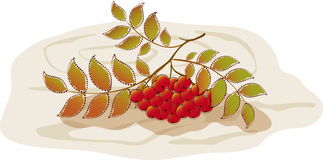 Red rowan on a background of tree. EPS10  illustration Stock Photography