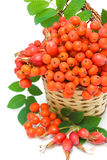Red rowan berries and rose hips in a wicker basket Royalty Free Stock Photo