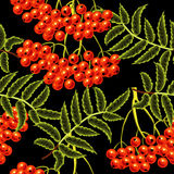 Red rowan berries seamless vector pattern. Royalty Free Stock Image