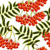 Red rowan berries seamless vector pattern. Stock Photography