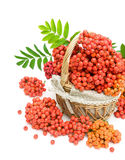Red rowan berries in a wicker basket on a white background Royalty Free Stock Images