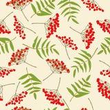 Red rowan berry seamless pattern Stock Photos