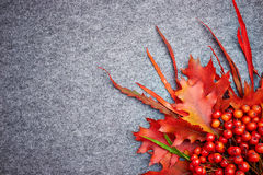 Red rowan lying and autumn leaves. Stock Images