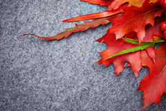 Red rowan lying and autumn leaves. Royalty Free Stock Images