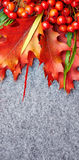 Red rowan lying and autumn leaves. Stock Photo