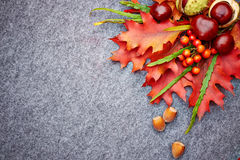 Red rowan lying and autumn leaves. Stock Photography