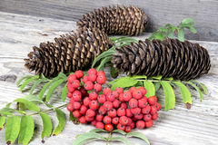 Red rowan with pinecones on wooden table Stock Photography