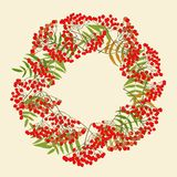 Red rowan wreath Stock Images