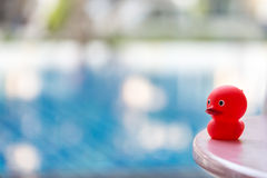Red rubber duck. Stock Photo