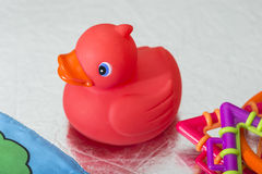 Red rubber duck. Toy for baths Royalty Free Stock Photos