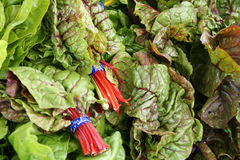 Red Ruby Chard Stock Images