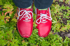 Red running shoes on a grass Royalty Free Stock Image