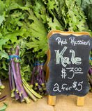 Red Russian Kale Stock Photo
