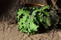 Red Russian kale leaves artistically arranged in a basket. Royalty Free Stock Photo