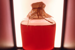 Red rustic bottle of sour liqueur isolated. National drinks. Stock Images
