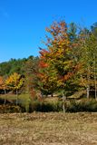 Red`s Orange`s and Yellow`s. Three beautiful trees showing off their true foliage colors of Orange`s red`s yellow`s and greens, reflecting off the water stock photo