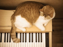 Red sad cat lies on the piano at home Stock Photo