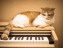 Red sad cat lies on the piano at home Royalty Free Stock Image