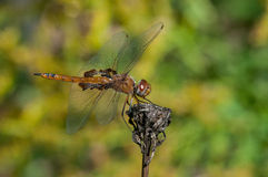 Red Saddlebags Royalty Free Stock Photo