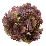 Red salad Stock Photography
