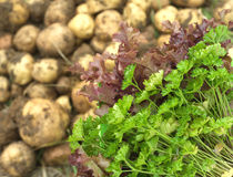 Red salad, green parsley and young potatoes close up Royalty Free Stock Images