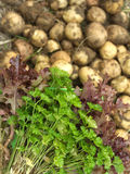 Red salad, green parsley and young potatoes close up Stock Photo