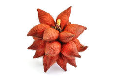 Red Salak Stock Photography