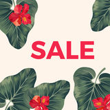 Red sale sign on promo poster with leaves and flowers. Big tropical alocasia plant leaves and exotic red hibiscus blossom vector illustration Stock Photos