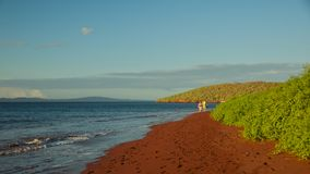 Red Sand Beach on Rabida Island Stock Photography
