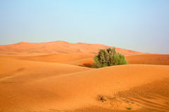 Red sand desert Royalty Free Stock Photo