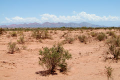 Red sand desert bush and mountains Stock Photos