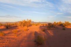Red sand desert with bush in sunset light Stock Photo