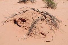 Red sand desert dead bush Stock Image