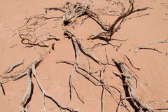 Red sand desert with dead bush Royalty Free Stock Photo