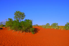 Red sand dune Royalty Free Stock Images