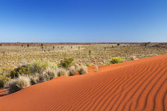 Red sand dune on a clear day, Northern Territory, Australia Royalty Free Stock Photo