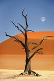 Red sand dune, Dead Vlei, Namibia Stock Images