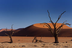 Red Sand Dunes and Dead Trees Stock Photos