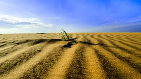 Red Sand Dunes Furrows. Stock Photos