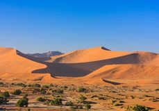 Red sand dunes of the Namib desert in morning light. Red sand dunes in morning light with shadows and trees at Sossusvlei in the Namib desert, Namibia stock photography
